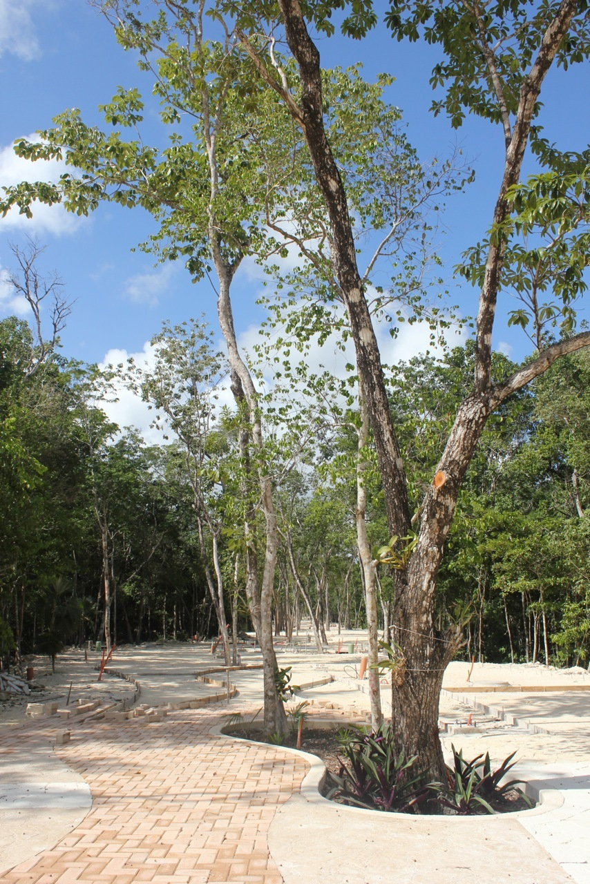 The trees will provide shade to the sidewalk of the main pedestrian street of Aldea Zama Tulum