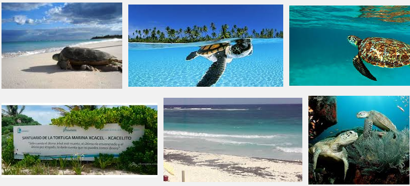 Perfect beaches and nature